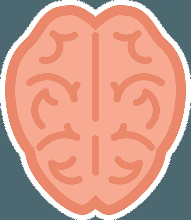 cuore-cervello